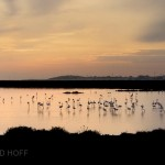 Flamingoes Sunset Spain