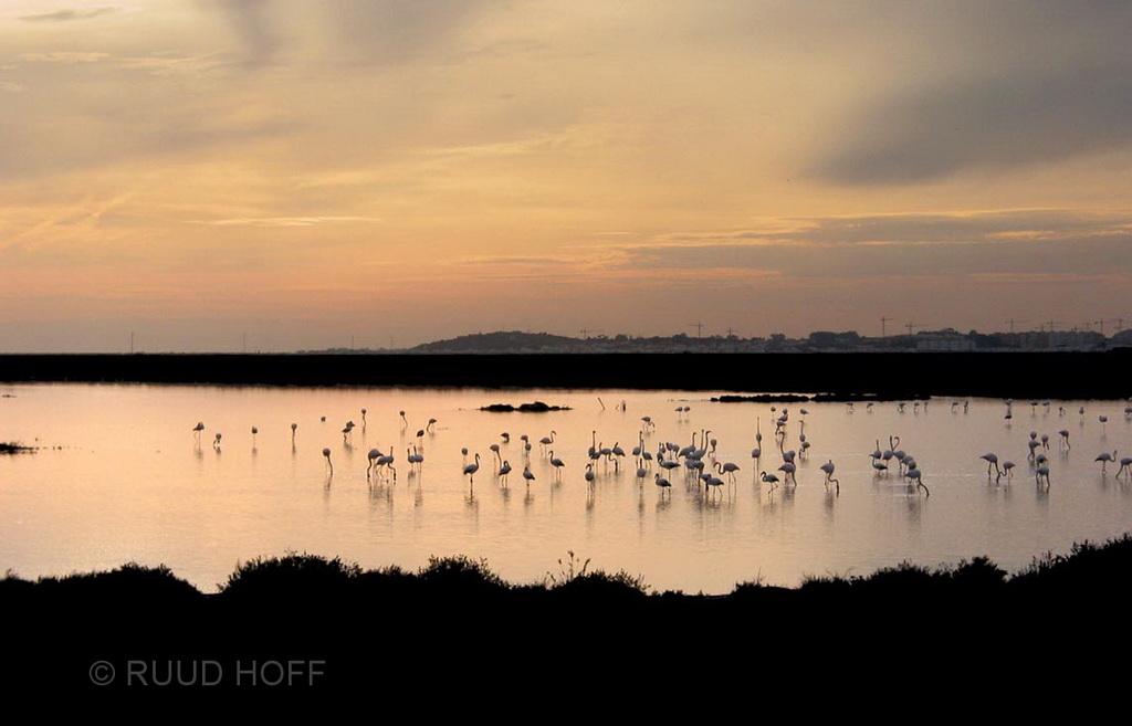 Flamingoes Sunset Spain