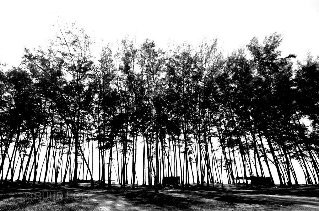 Bamboo India