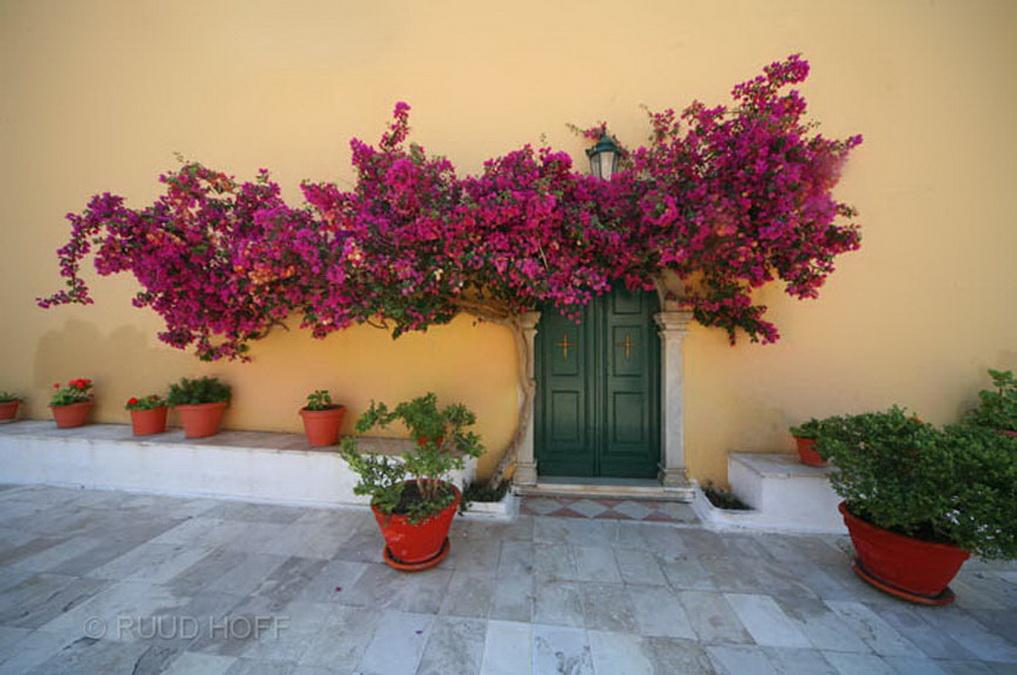 bougainville Corfu